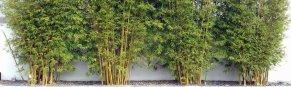 Spun Bamboo Women s Bamboo and