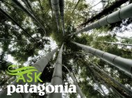 bamboo, Patagonia, eco-fashion, renewable manner, green fashion, Ask a Designer
