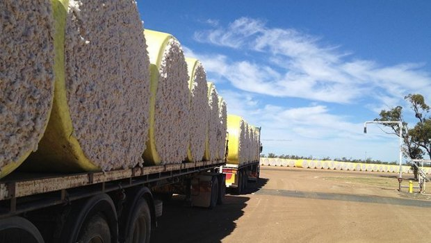 Cotton Harvest Job